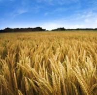AGRI_komisje